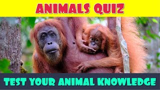 Animal General Knowledge Quiz | How Much Do You Know About Animals? | Animal Trivia Quiz