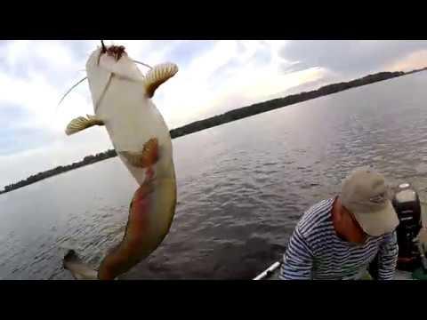 СЕКРЕТЫ ЛОВЛИ СОМА НА КВОК от ПРОФФИ !!!! Ловля сома на квок 2019 / Квочение сома. Catfish / Сом
