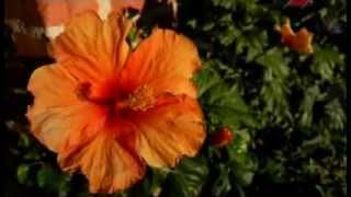 Сад духовного возрождения