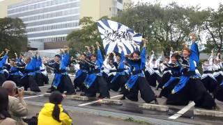 秋田大学よさこいサークルよさとせ歌舞輝さん、若林区役所で行われたみ...