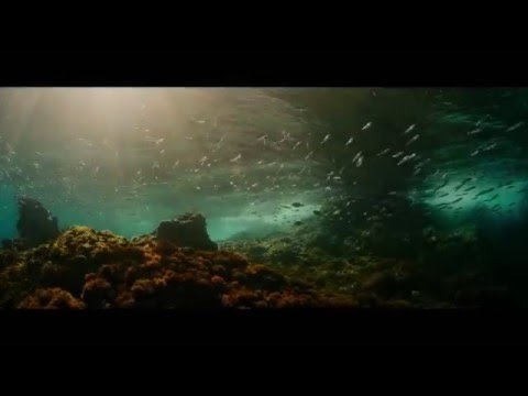 Evrim Filmi (2015)