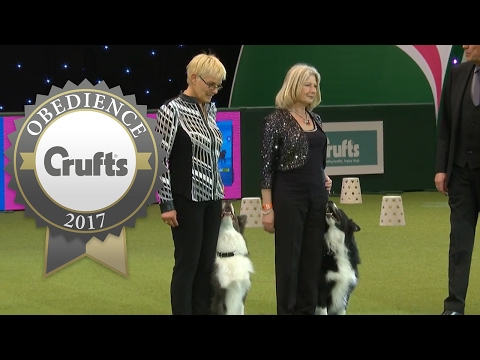 Obedience Champion and Reserve (Dog) Display | Crufts 2017
