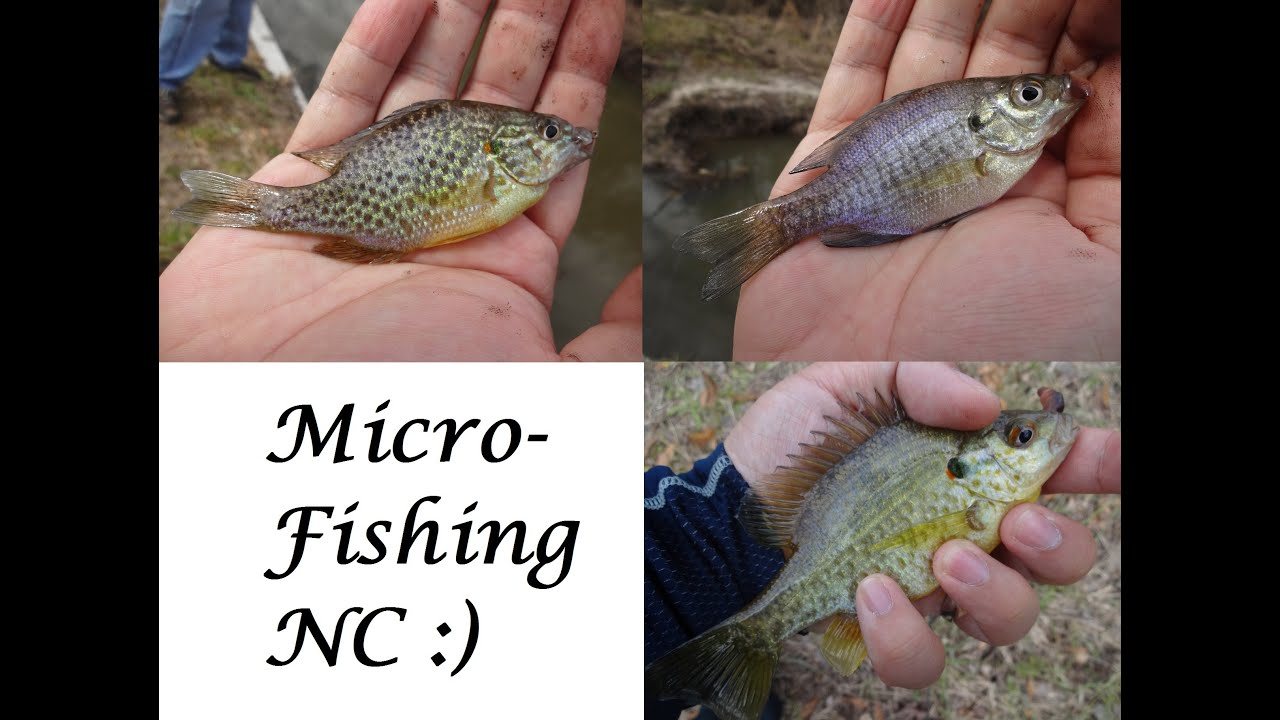 Micro fishing a nameless creek by the road jacksonville for New river nc fishing