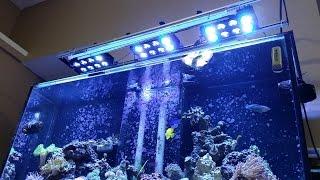 120g Saltwater Fish Tank Coral Reef Update