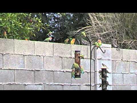 Love Birds in our Phoenix backyard