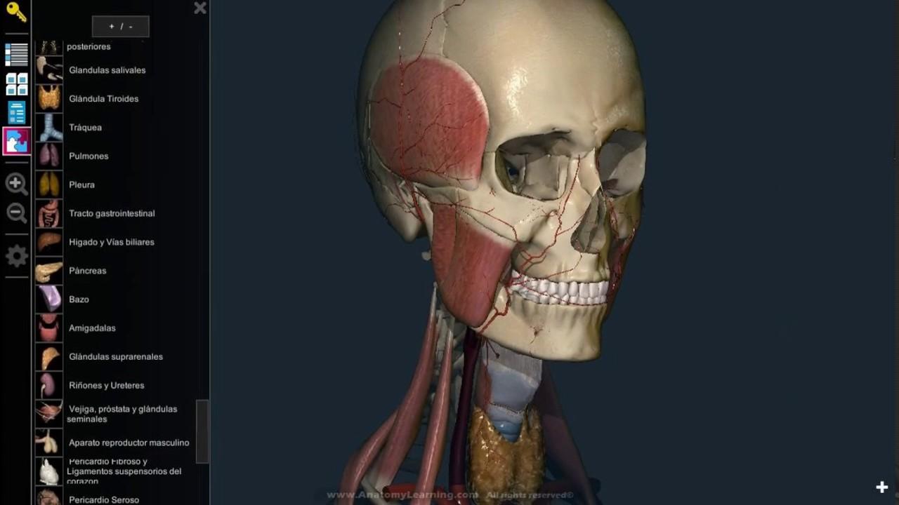 Mejor software de anatomía para estudiantes de medicina - YouTube