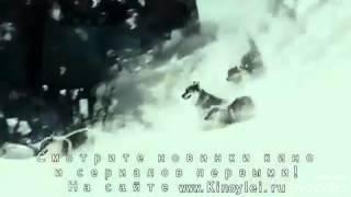Отрывок из фильма-про волков