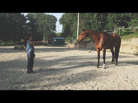 Come Far Sdraiare Un Cavallo.I Tutorial Del Bosco Come Insegnare Al Nostro Cavallo Il
