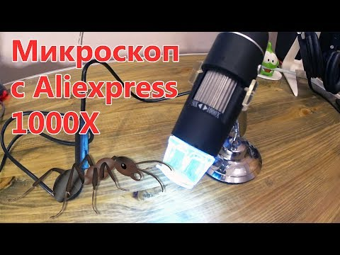Микроскоп с Aliexpress 1000X - Обзор! Муравьи под микроскопом!