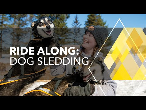 Ride Along: Dog Sled Racing