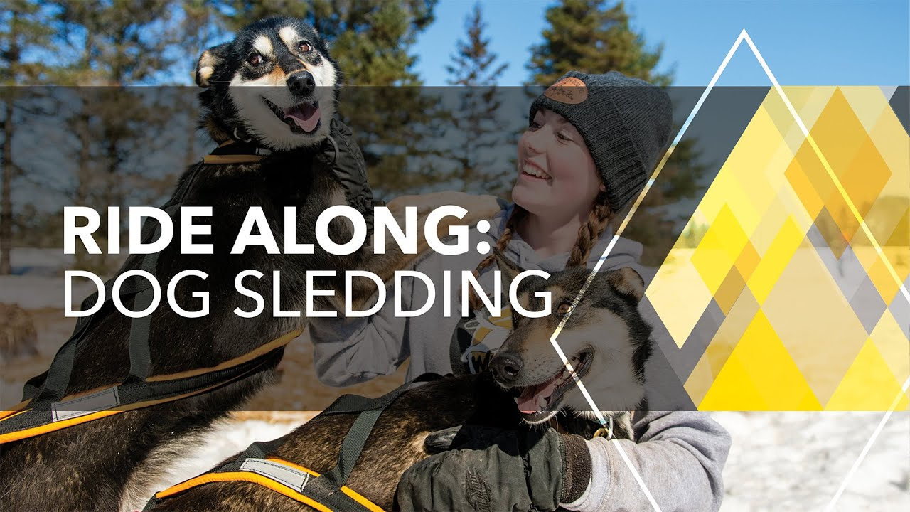 Preview image for Ride Along: Dog Sled Racing video