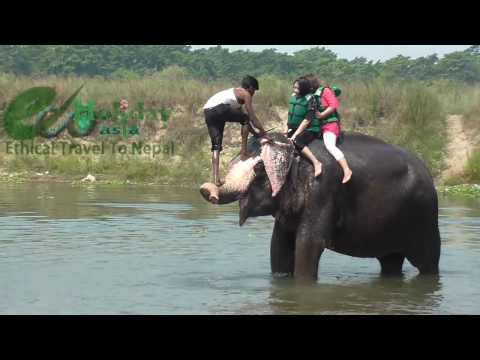 Funny Elephant Bath in Chitwan National Park - Nature Bath with Elephant