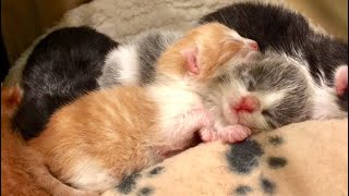 New Life Begins Baby Kittens - Peaceful Relaxing Music