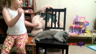 Инструкция к коту
