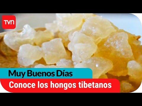 el hongo tibetano sirve para adelgazar