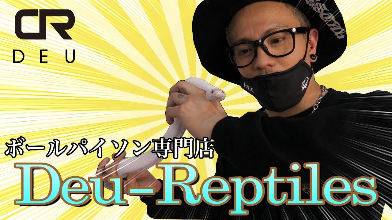 ボールパイソン専門店 Deu-Reptiles