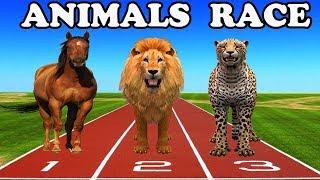 wild animals & domestic animals running race | learn through cartoons for kids children kindergarten