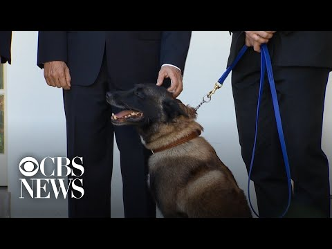 Hero military dog Conan honored for raid on ISIS leader