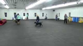 World Class Dog Kennels, Beginner Obedience Class, Chicago Il.