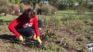 Prepare for Spring with Fall Garden Cleanup