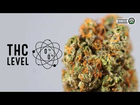 White Widow Feminized Cannabis Strain And Marijuana Seed Facts