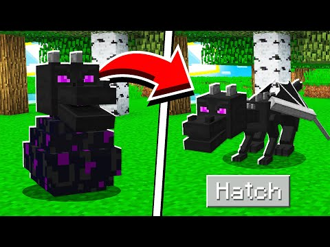 How To HATCH The ENDER DRAGON EGG In Minecraft Tutorial!