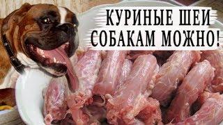 Собакам мОжно куриные шеи!