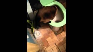 Кот сам стал ходить в туалет. Не учили.