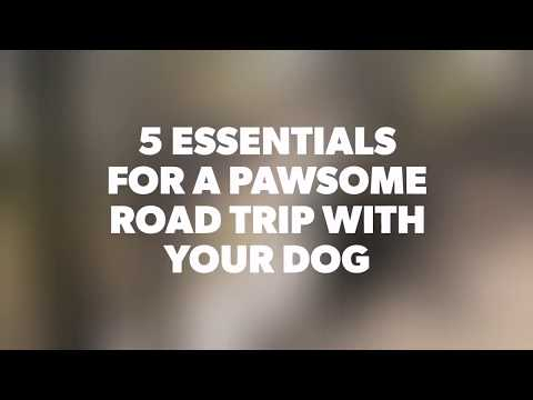 5 ESSENTIALS FOR A PAWSOME ROAD TRIP WITH YOUR DOG ⎟ #ShotOnHonorView10