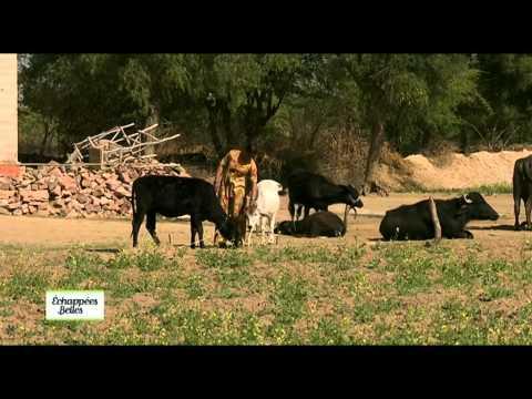 Inde, Rajasthan - Echappées belles