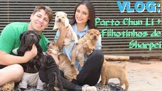 Vlog: Parto Chun Li, Filhotes De Sharpei!