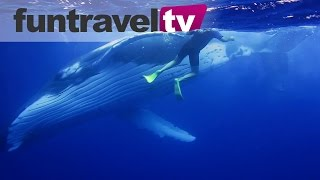 Humpback Whales in the Ha'apai islands of Tonga