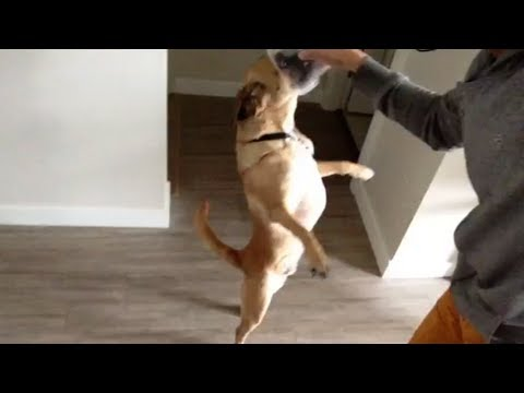 Funny Dog Trick