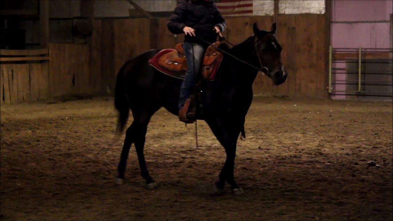 SOLD - 2015 AQHA Western Pleasure Gelding - YouTube