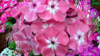 ФЛОКСЫ (клип) Называют меня некрасивою Наталия Муравьева Застольные песни 50-60