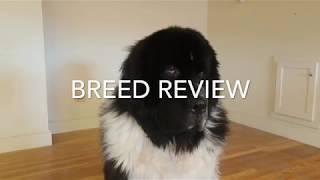 Newfoundland Review