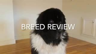 Newfoundland Review
