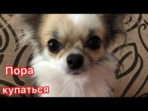 Купаю собаку/стрижка лап | Дарья FOX