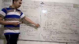 Abses Paru, Infeksi Bakteri yang Menyebabkan Adanya Kantong Berisi Nanah di Dalam Paru-paru.