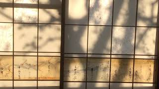 木立の影 thumbnail