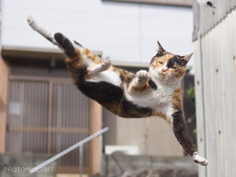 Animals Are Mean Sometimes - Cat Does Ninja Kick