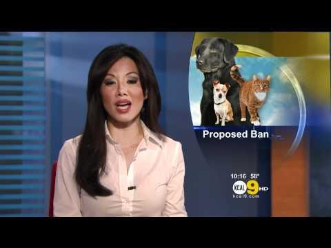 Sharon Tay 2012/03/21 KCAL9 HD; White dress shirt