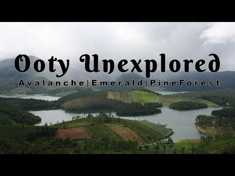 OOTY Unexplored | Avalanche | Emerald | Pine Forest