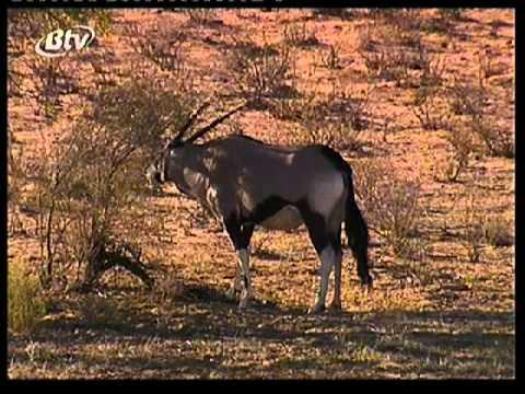 Botswana TV promo
