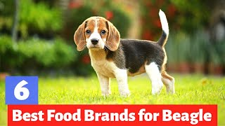 6 Best Dog Foods for Beagles in 2022 | Which one is Best for you?