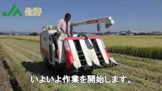 【JA佐野】認定農業者 金井氏による稲刈りの様子