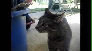 Смешные разговаривающие коты/Funny talking cats. Smile my friend!