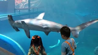 Blippi was here at the Zoo Aquarium   Learn Sea Animals for Children