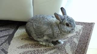 44 minute livestream of a rabbit