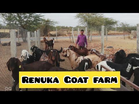 Renuka Goat farm, nagaur (rajasthan)